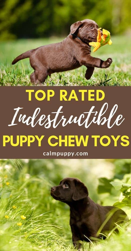 top rated indestructible puppy chew toys pinterest pin