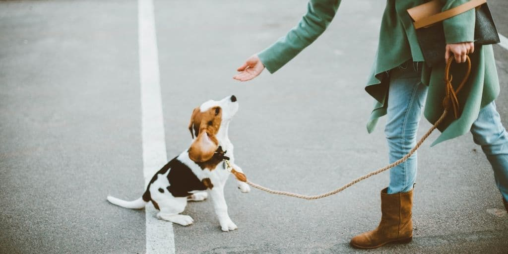 rewarding puppy during training